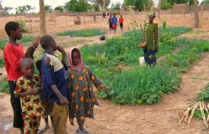An ECOVA-Mali community garden in Mali