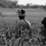 A women's group hired to pick a cotton field. They are singing to pass the time.
